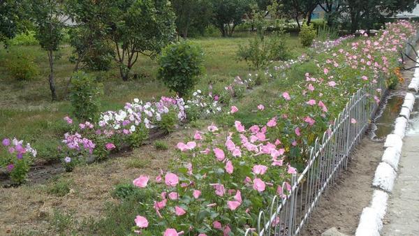В мае можно посадить в открытый грунт