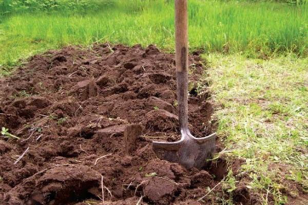 Нужно правильно вскопать землю