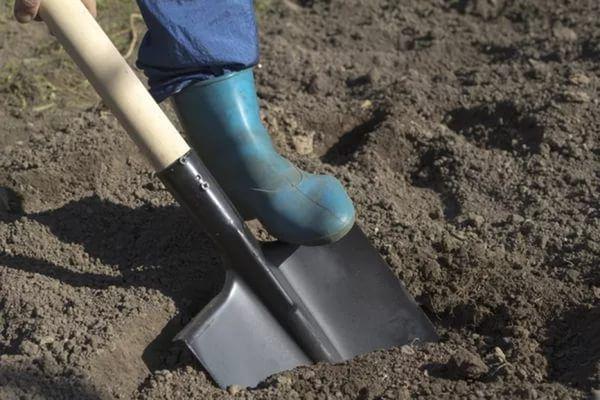 Сухой грунт является неблагоприятной средой дрожжевых удобрений