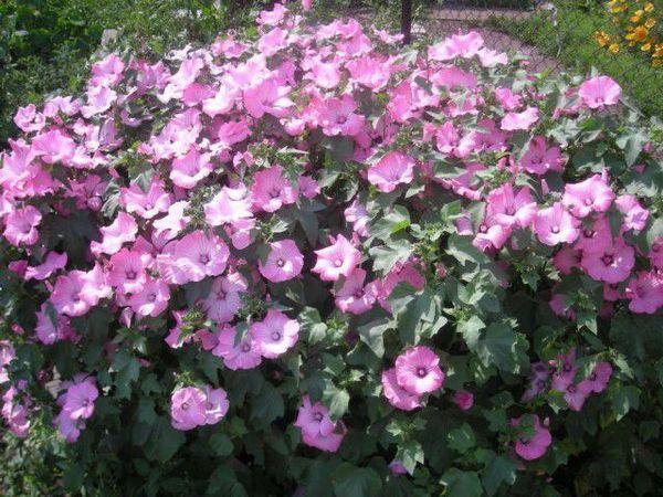 Нужно действовать четко, если надо посадить цветок на грядку