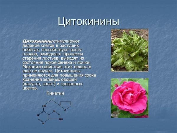 О цитокинине