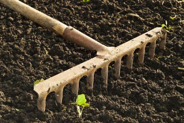 Рыхлить землю нужно до определенного времени