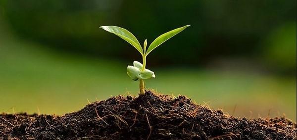 К сожалению, растению подойдет далеко не каждый грунт