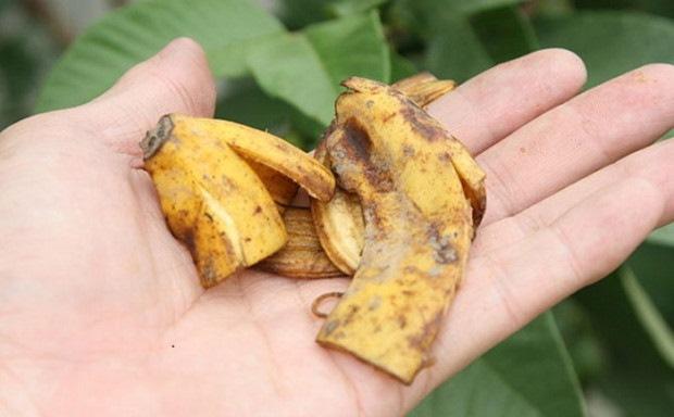 Банановая кожура имеет в своем составе много полезных элементов