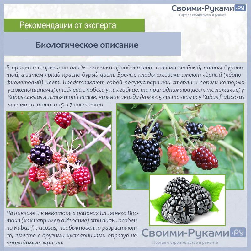 Биологическое описание