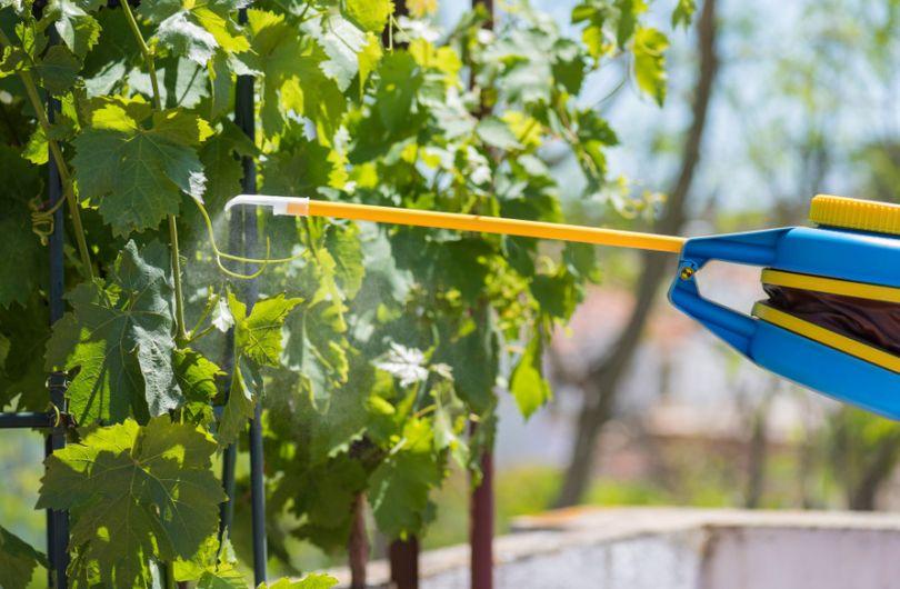 Опрыскивание листьев повышает скорость впитывания удобрения
