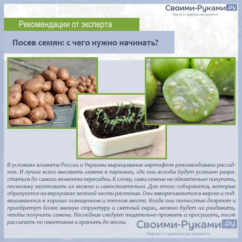 Посев семян с чего нужно начинать