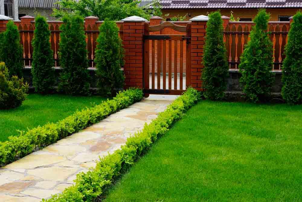 Сочетание газона с декоративными кустарниками