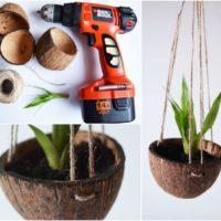 Из кокосовой скорлупы можно смастерить интересное кашпо