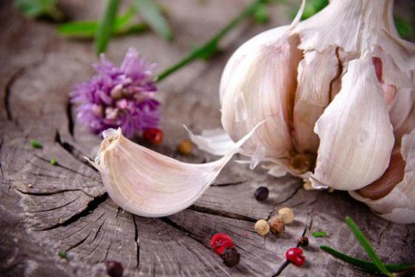 Чеснок представляет собой антибиотик натурального происхождения