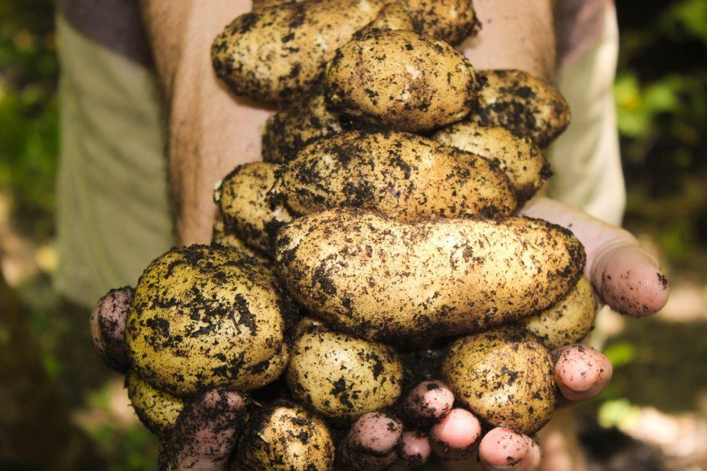 Чтобы получить хороший урожай, нужно следовать всем рекомендациям