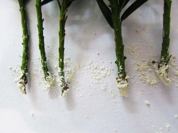 Корневин стимулирует рост корней растения
