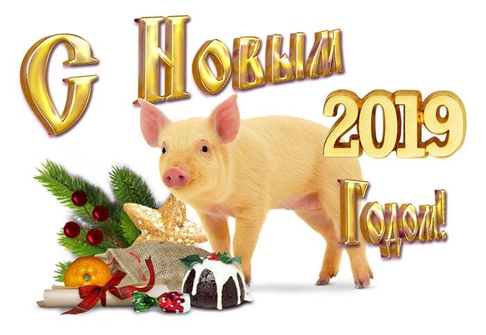 Где и как правильно встретить Новый Год Свиньи 2019