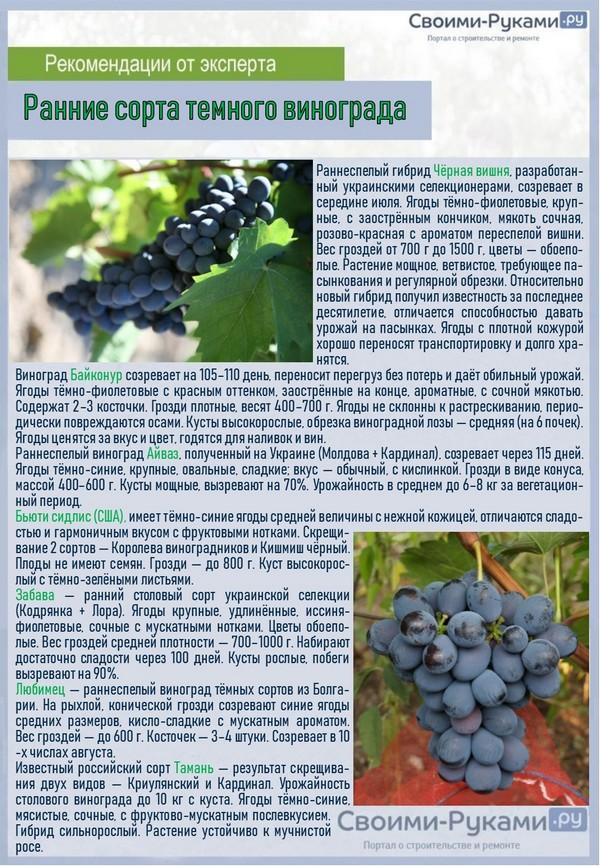 Темные винограды