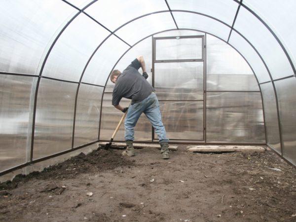 Заранее перекопайте почву в теплице