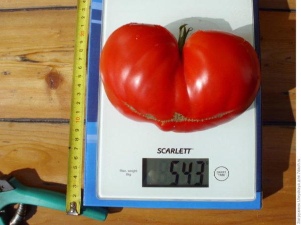 Крупноплодные сорта – с помидорами массой 400 граммов и больше