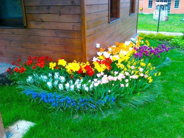 Групповая посадка цветов