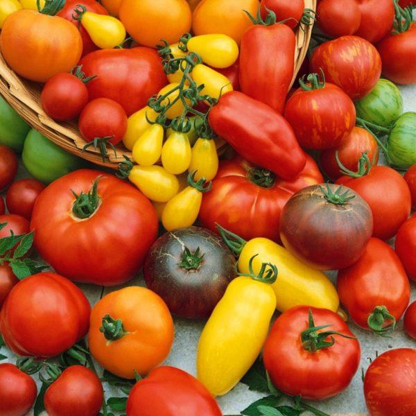 Сортовое разнообразие томатов