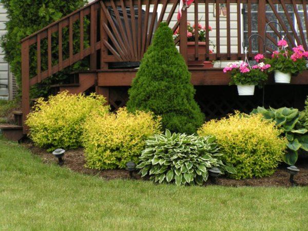 Кустарники в саду – это прекрасное сочетание эстетики и практической пользы»