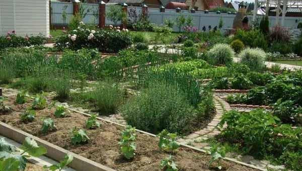 красивый дизайн огорода своими руками