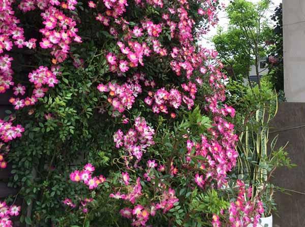 цветы во дворе частного дома