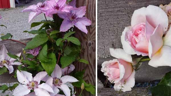 обустройство участка заборы с цветами
