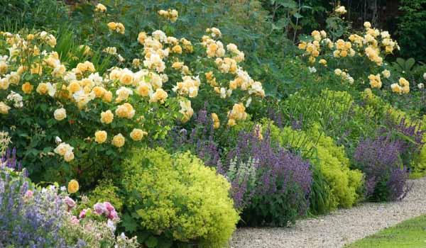 как посадить клумбу непрерывного цветения