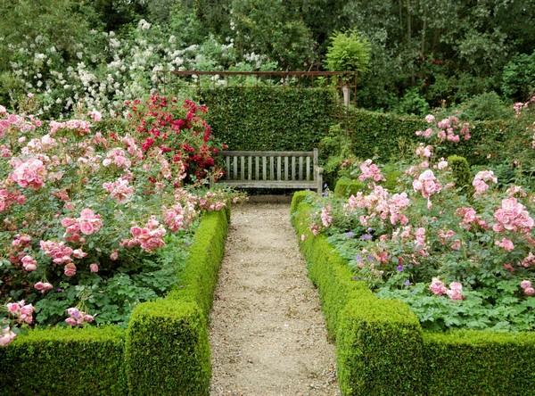 Сочетание самшита и роз