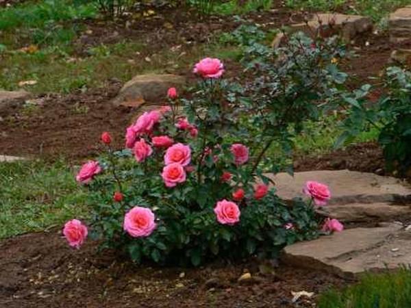 Важно высаживать цветы в определенное время