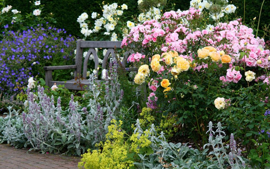 В зависимости от цвета самих роз нужно подбирать им «соседей»