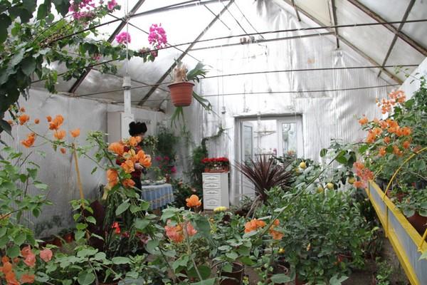 В теплице, построенной под землей, можно выращивать даже экзотические растения
