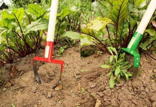 Удаление только верхней части сорняка оставляет корень в почве, который со временем превращается в питательную среду для полезных микроорганизмов