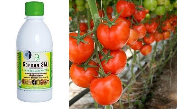 Благодаря использованию «Байкал ЭМ1» можно получить богатый урожай овощных и других садовых и огородных культур