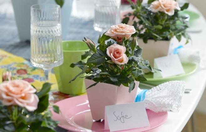 Миниатюрная роза Breeze из серии Party