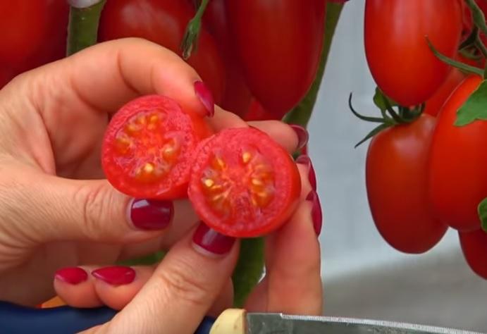 Мякоть помидора Джекпот на срезе