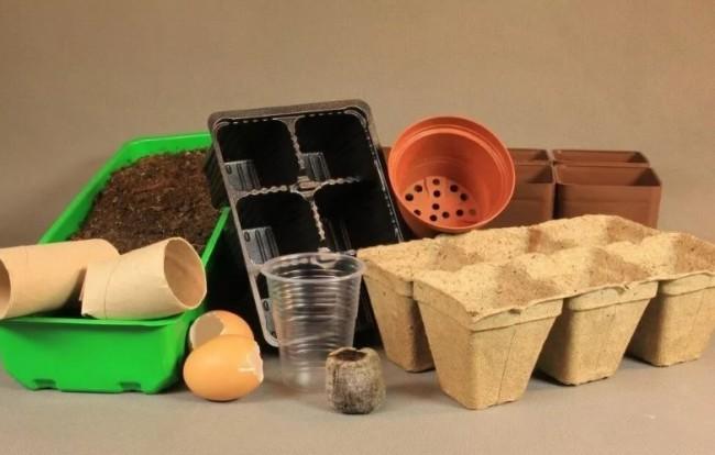 Емкости для выращивания рассады баклажан
