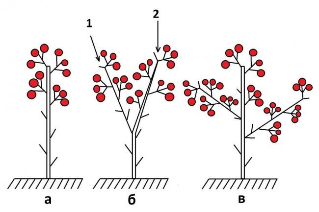 Формирование томатов в 1-3 ствола